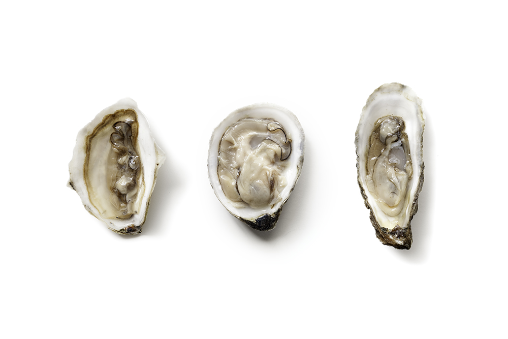 'oysters_2' from the web at 'http://lauratogut.com/wp-content/uploads/2015/08/oysters_2.jpg'